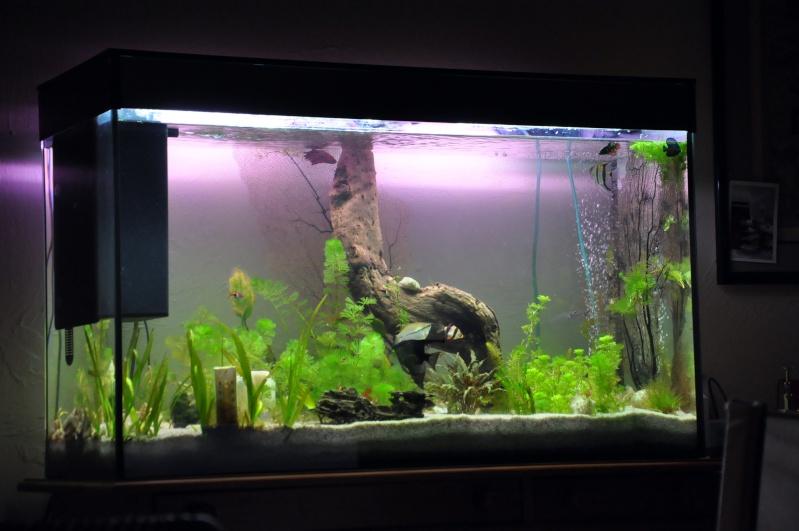 mon aquarium de 180L  communautaire Aquari11