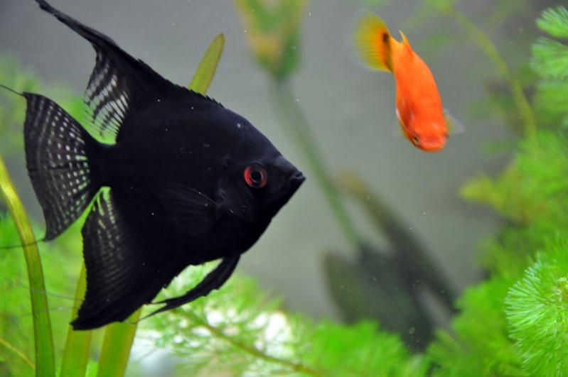 mon aquarium de 180L  communautaire Aquari21