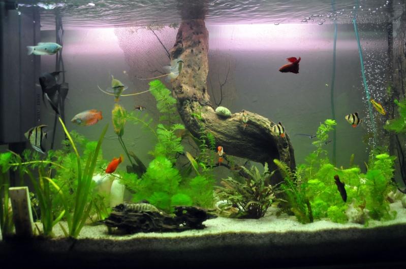 mon aquarium de 180L  communautaire Aquari24