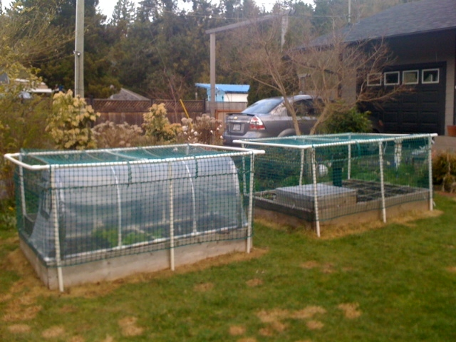 Chicken wire cage for vining vegetables? Apr16-10