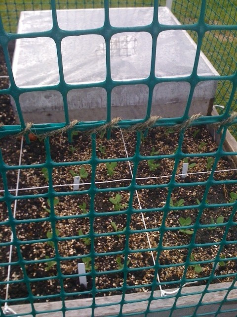 Brand new to SFG!  My first efforts... Garden22