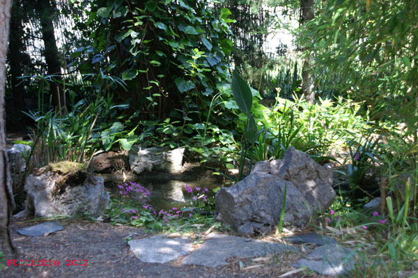 Mon petit bassin extérieur 5-6-2010