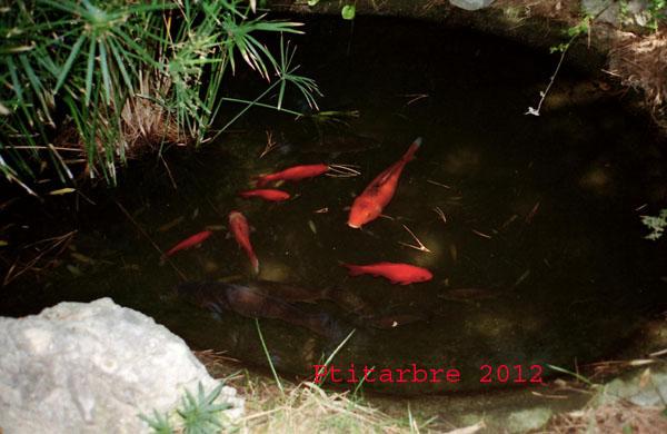 Mon petit bassin extérieur Scan1011