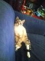 La  jolie petite Dheema [ex Jolie petite Poupée Wendy, 5 mois (convalo Fracture+luxation du péroné)] Photo012