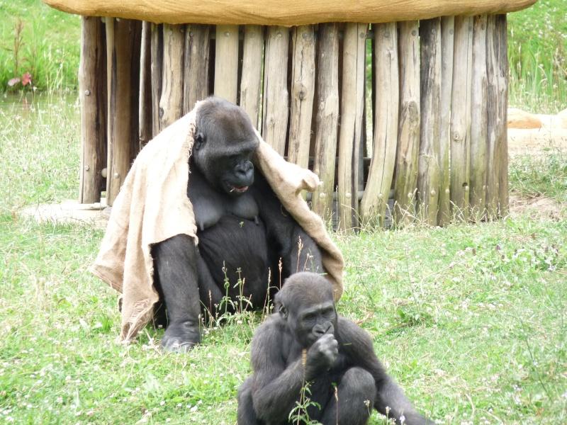 zoo de la palmyre P1090716