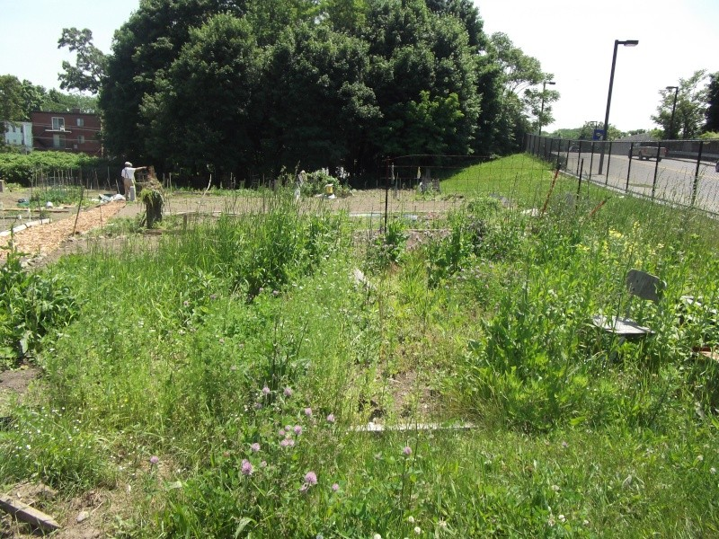 Need tips on how to prepare and overgrown plot! Dscf3112