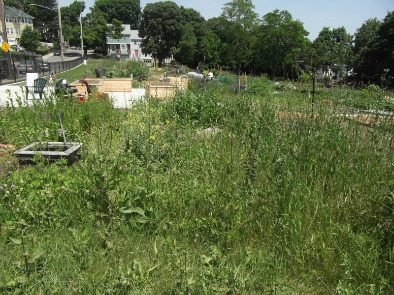Need tips on how to prepare and overgrown plot! Dscf3113