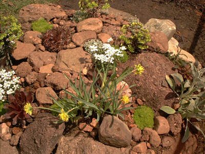 How do I build a rock garden from scratch? Rck_gr12