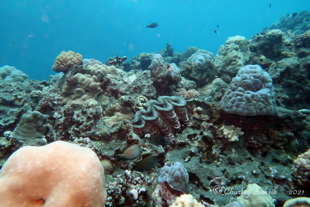 Pour les amoureux de la mer ... Plongz12