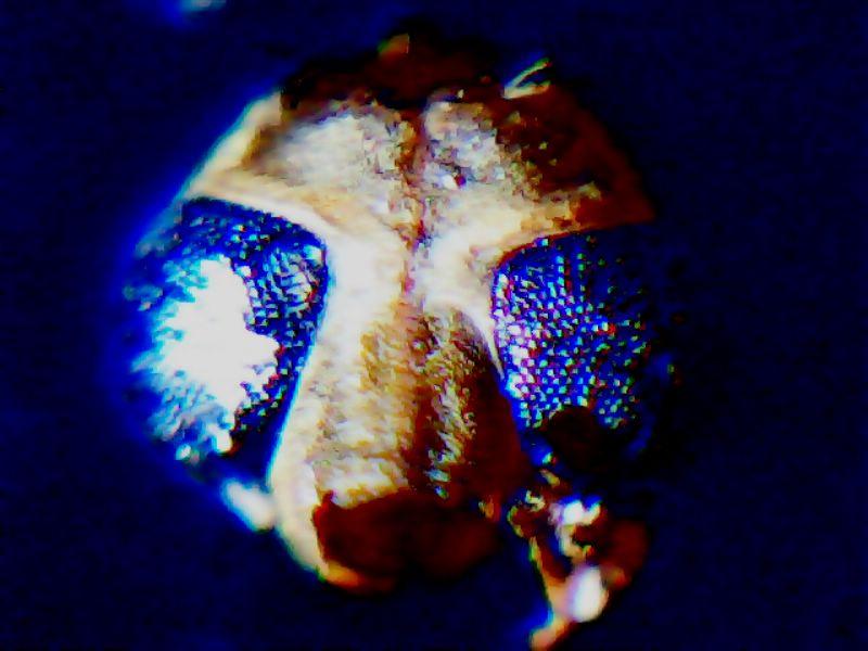Aide identification termites 2012_012