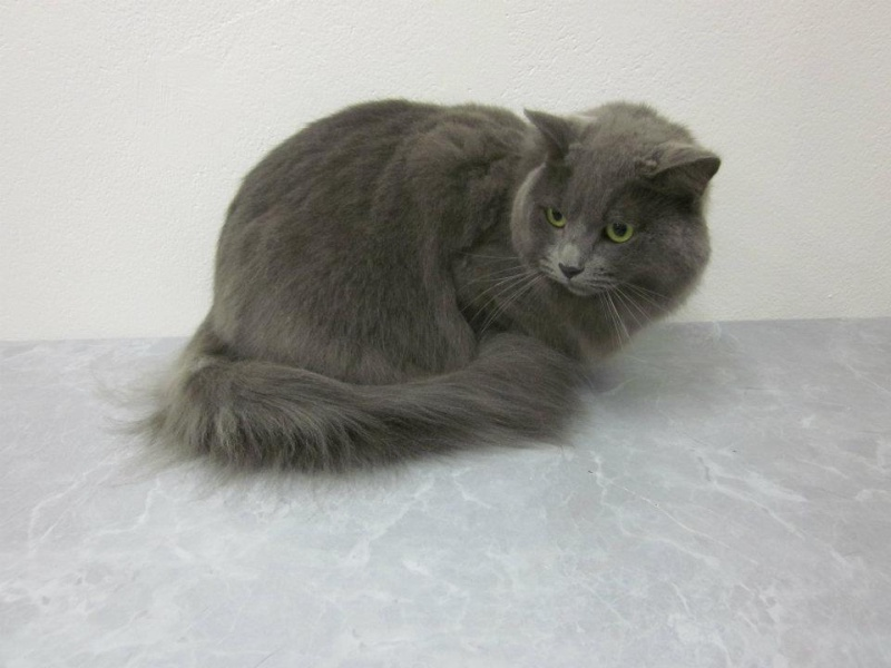 Possible Nebelung Alice_11