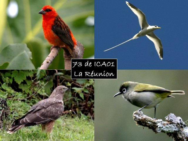 AMATEUR SSTV  Oiseau10