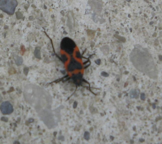 Bug ID... Help Img_6510