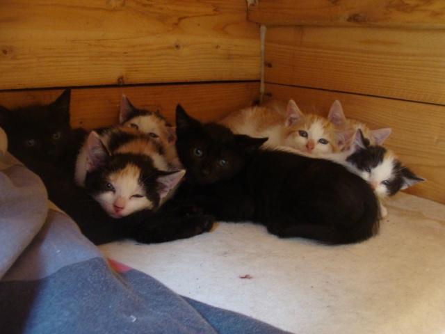 La face cachée de l'Ecole du chat de Quiberon Dsc05343
