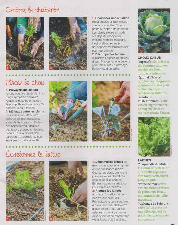 au jardin - Page 3 1012