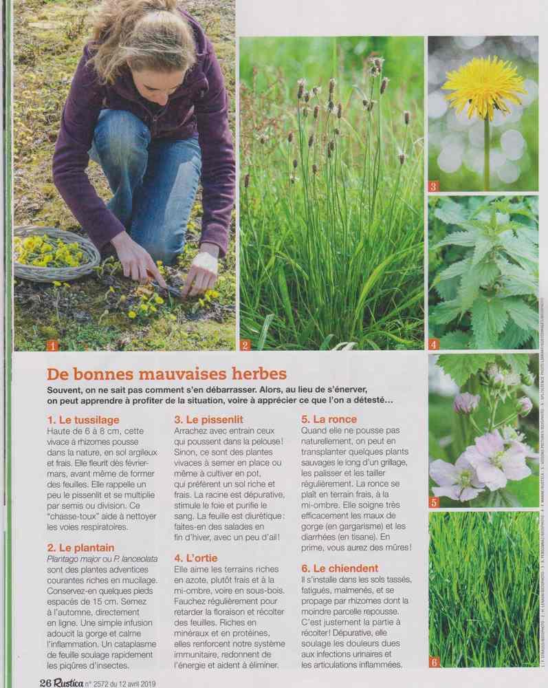 les plantes qui soignent - Page 5 1013