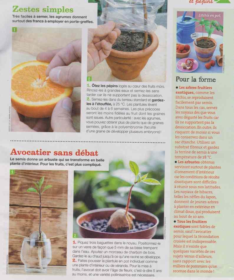 au jardin - Page 9 1025