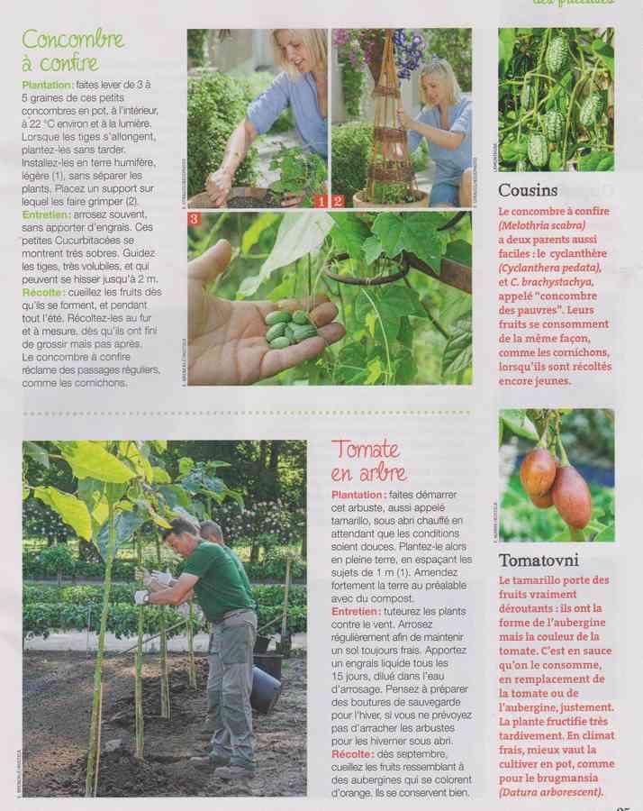 au jardin - Page 34 1055
