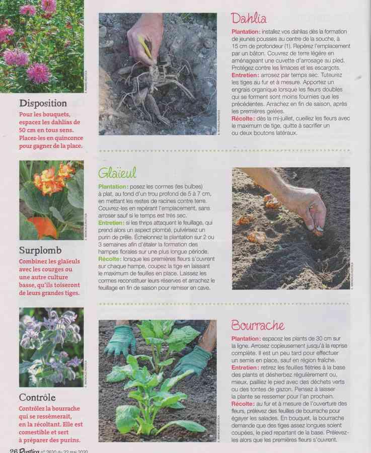 au jardin - Page 34 11107
