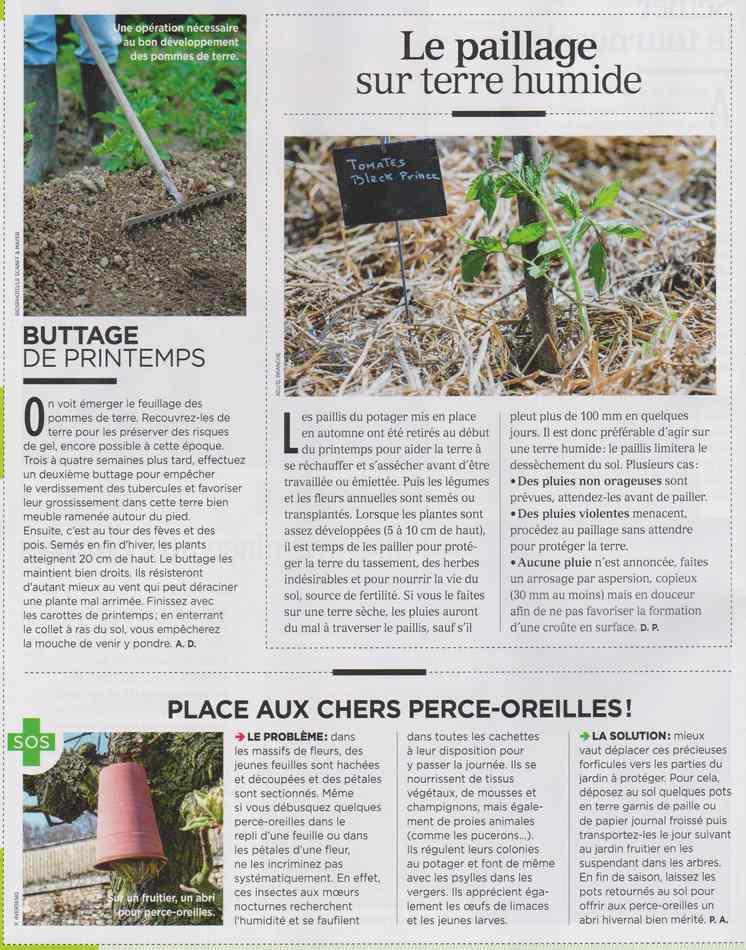 au jardin - Page 3 1112