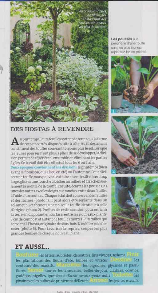 au jardin - Page 5 1116