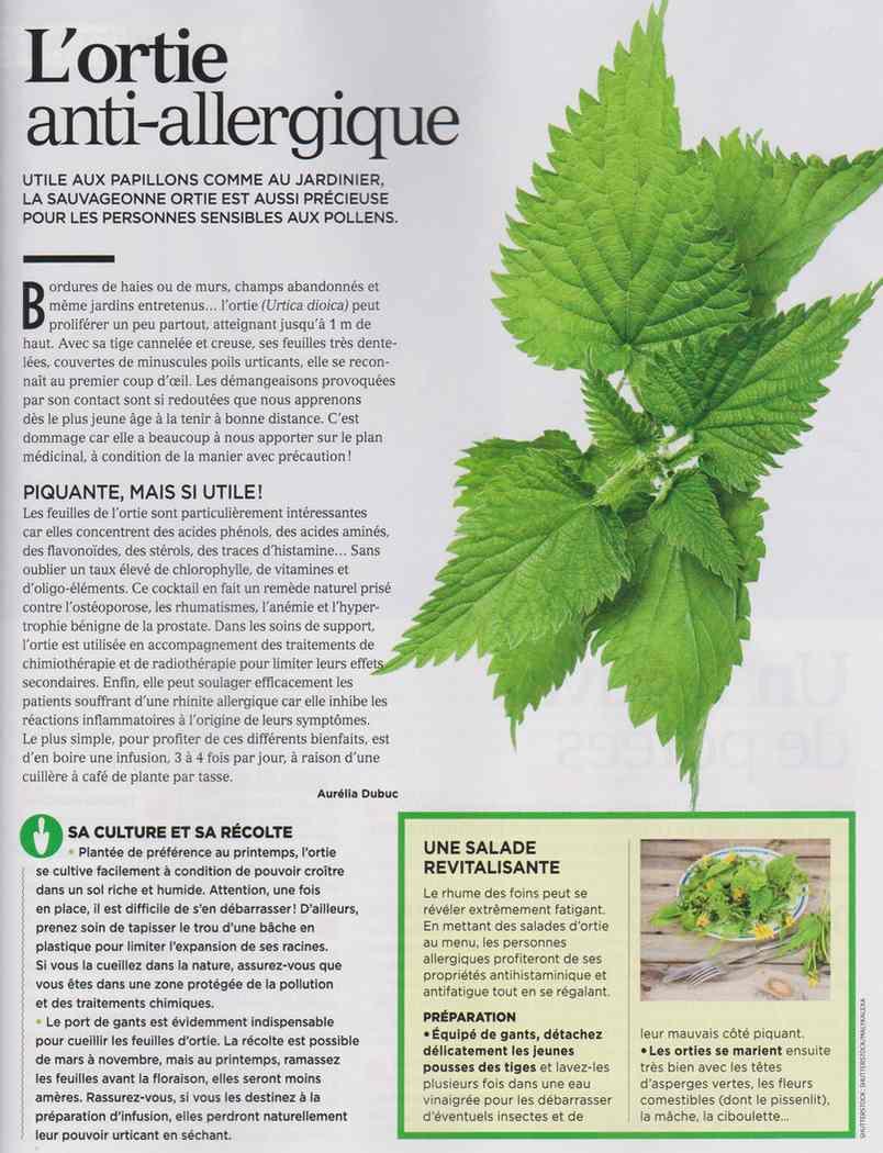les plantes qui soignent - Page 4 112