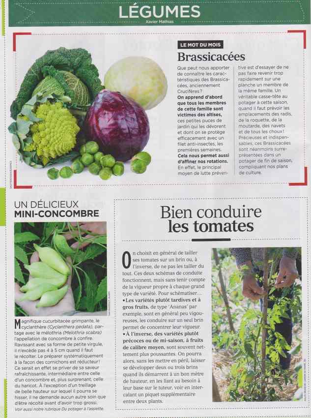 au jardin - Page 7 1121