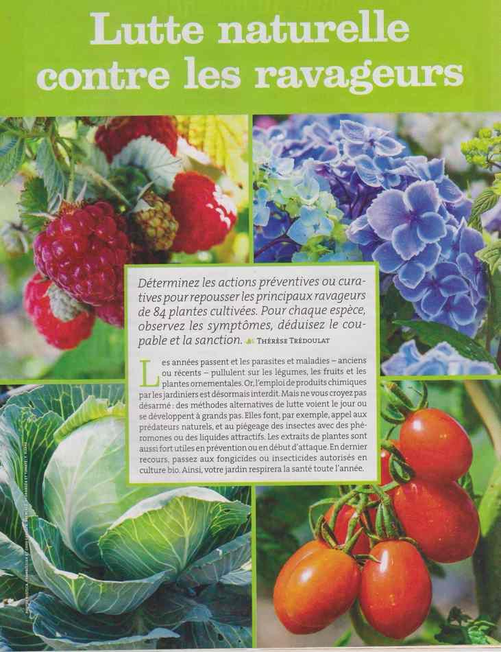 au jardin - Page 28 1172