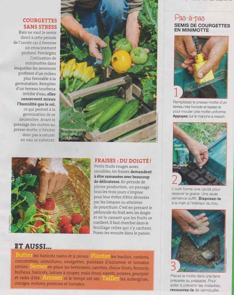 au jardin - Page 7 1219