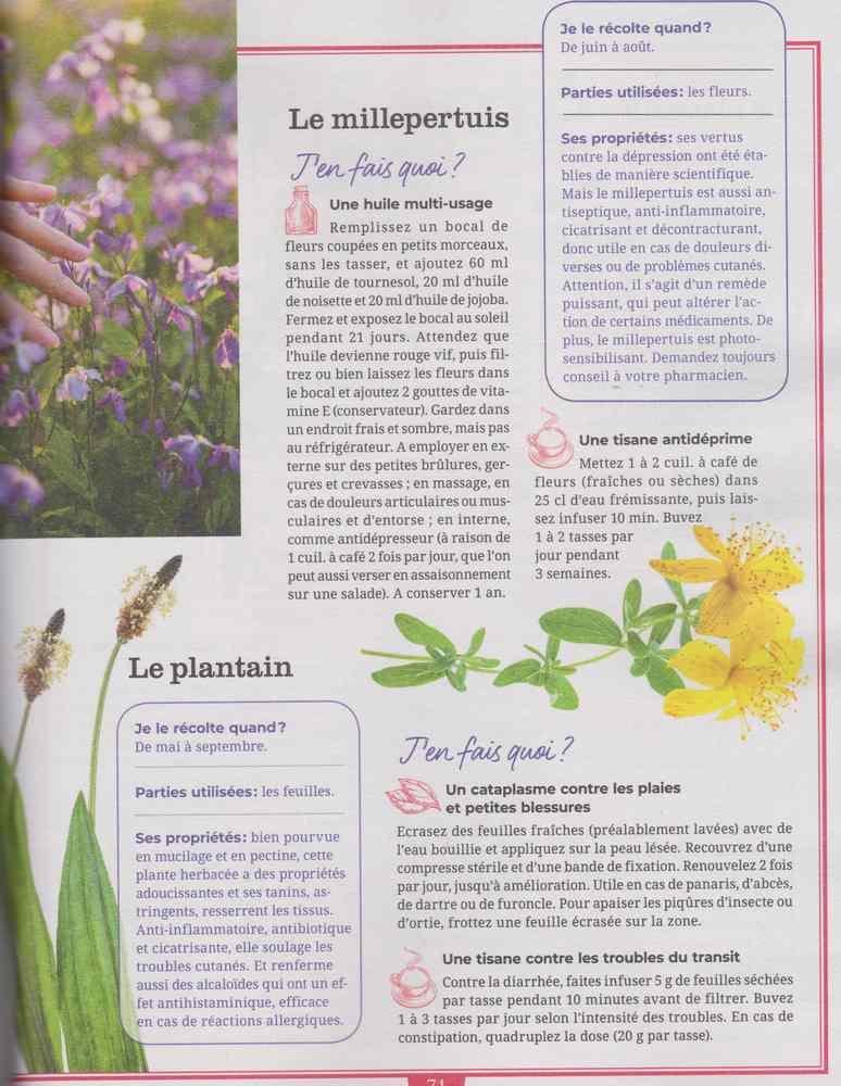 les plantes qui soignent - Page 8 1224