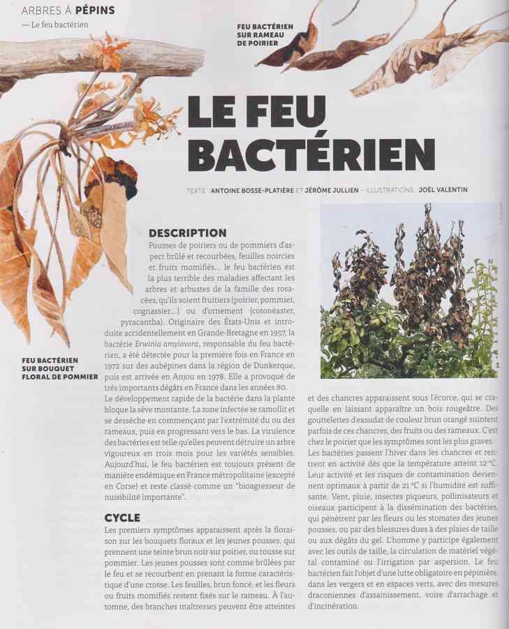 les maladies au jardin 1253