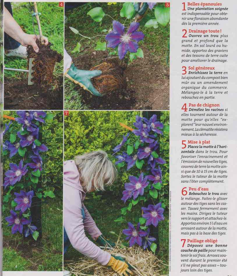 au jardin - Page 2 1311