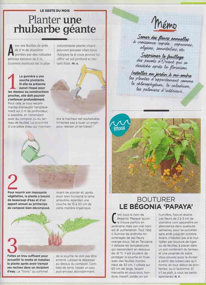au jardin - Page 3 1312