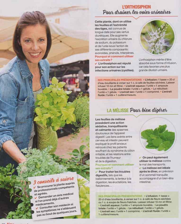 les plantes qui soignent - Page 9 1335