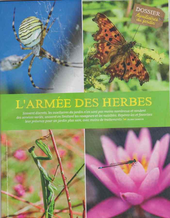 au jardin - Page 5 139