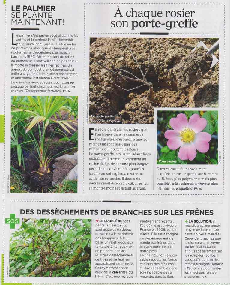 au jardin - Page 4 1412
