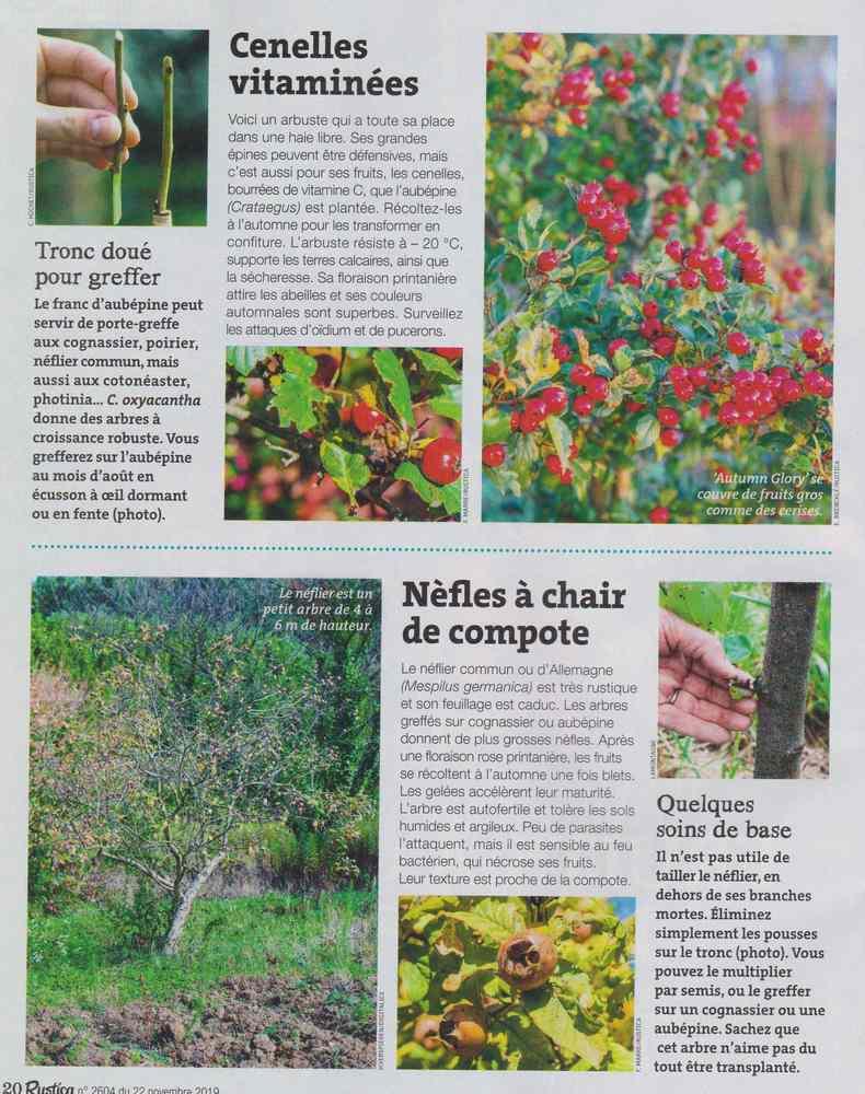 au jardin - Page 18 1423