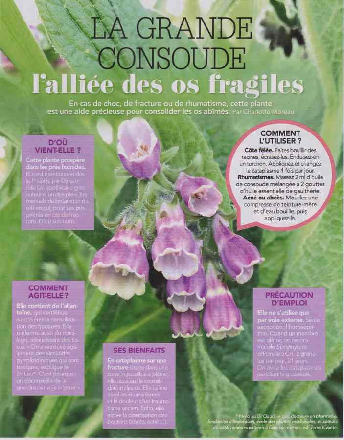 les plantes qui soignent - Page 5 143