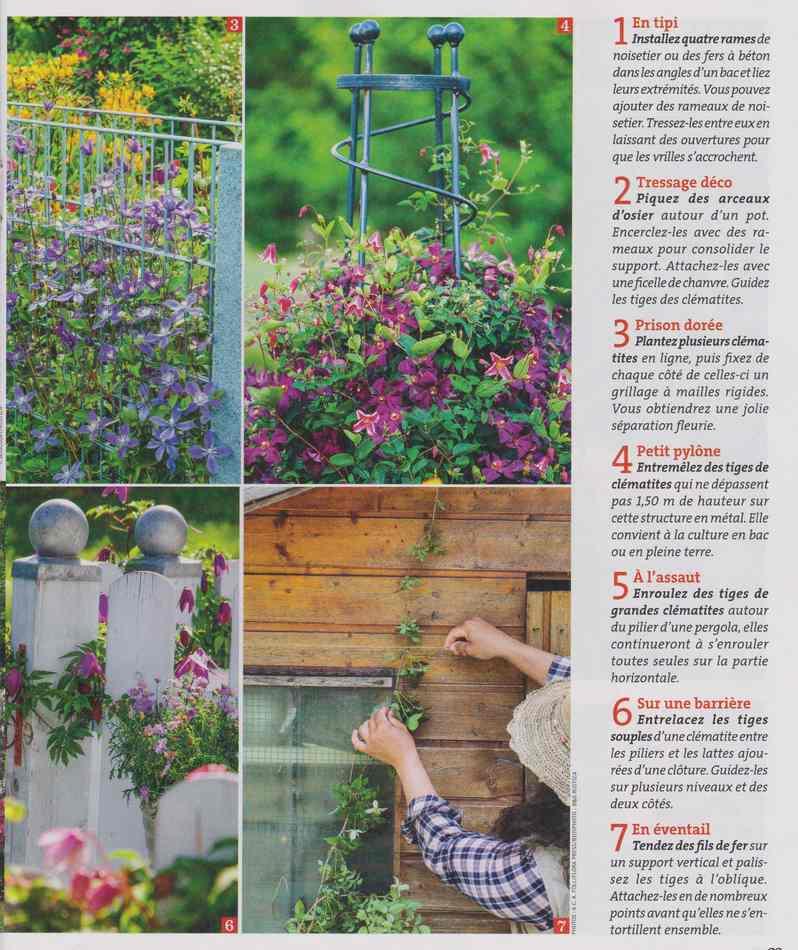 au jardin - Page 2 1511
