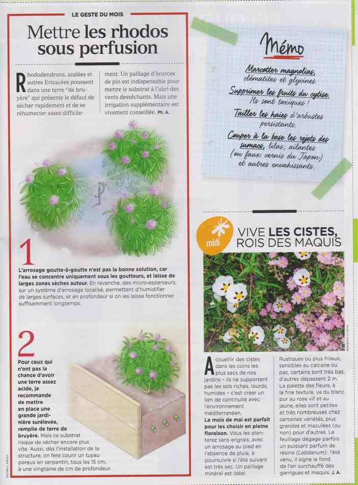 au jardin - Page 4 1512