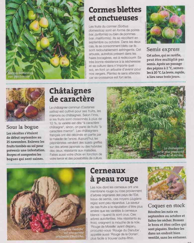 au jardin - Page 18 1524
