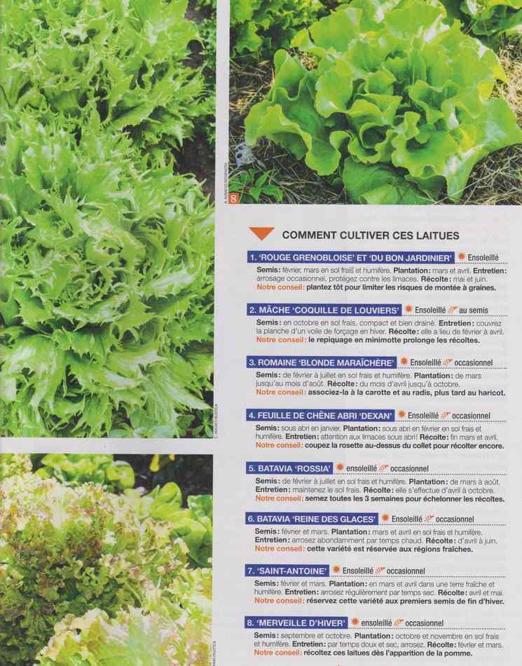 au jardin - Page 28 1530