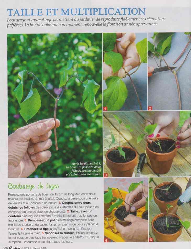 au jardin - Page 2 1610