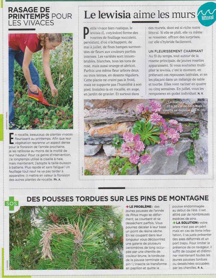 au jardin - Page 4 1611