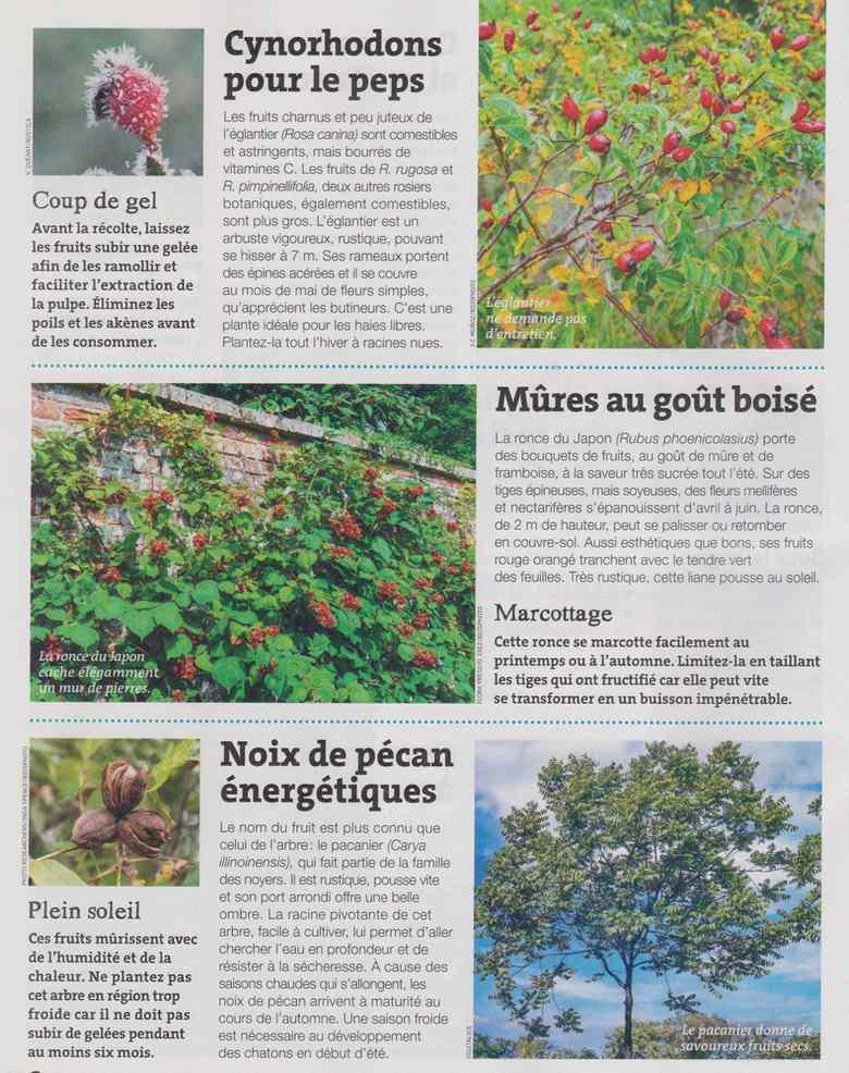 au jardin - Page 18 1621