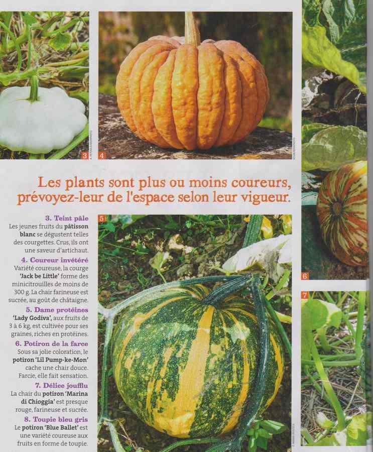 au jardin - Page 34 1638