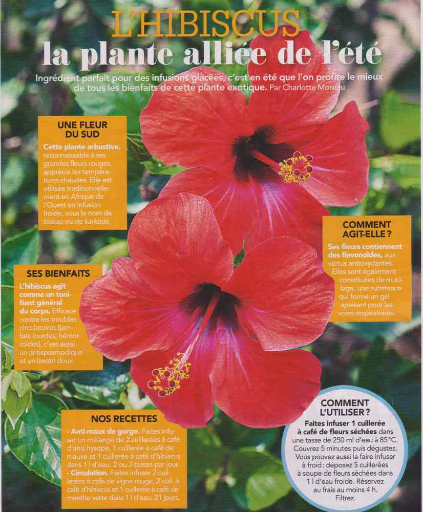 les plantes qui soignent - Page 7 165