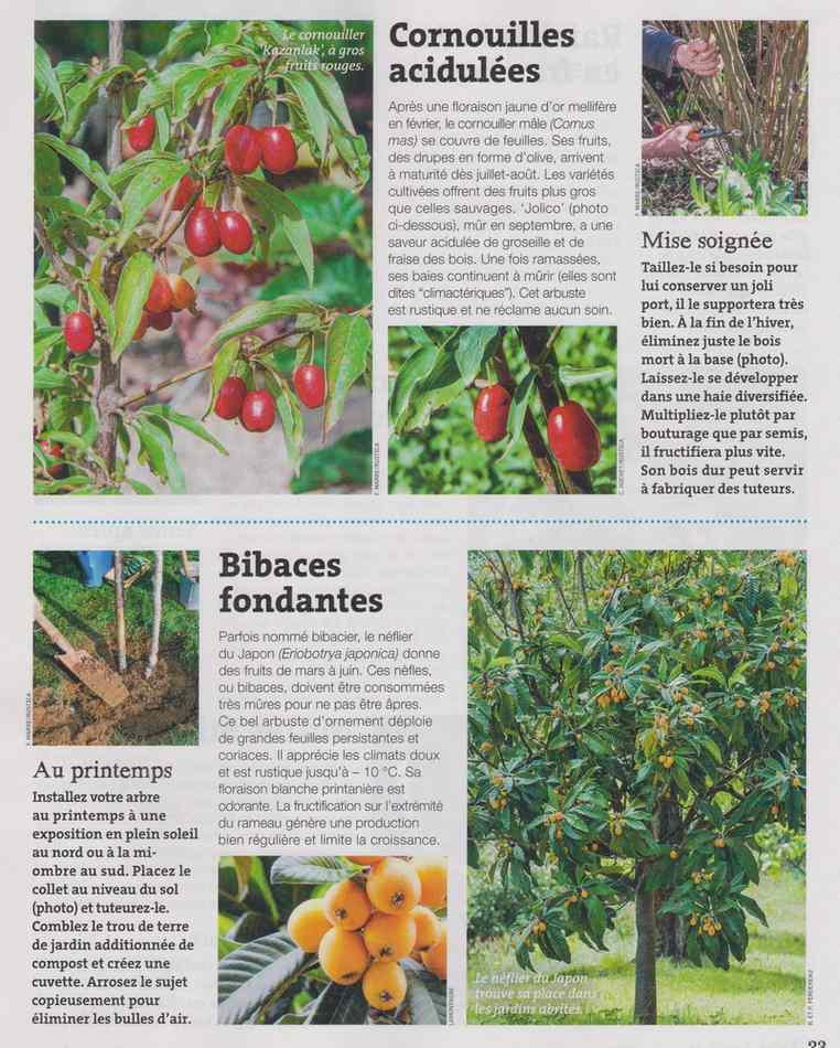 au jardin - Page 18 1723