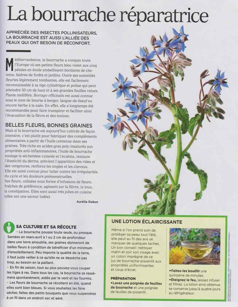 les plantes qui soignent - Page 8 178