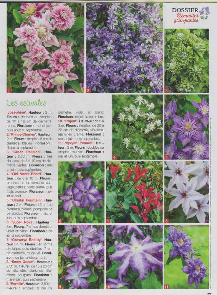 au jardin - Page 2 1910